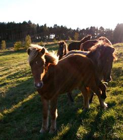 Priser landbrugsjord østjylland